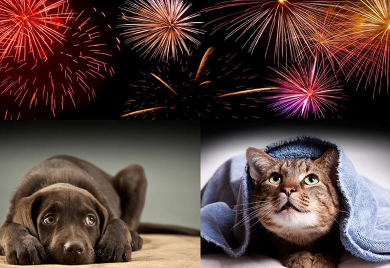 Help Your Pets Cope with Firework Night